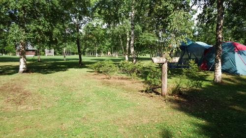 桜ケ丘森林公園オートキャンプ場 スタンダードカーサイト