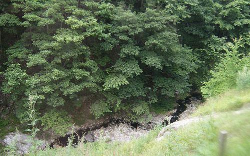 鹿の湯からの原生林と小川