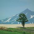 十勝岳と日の出公園の木