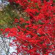 登別亀田記念公園の紅葉
