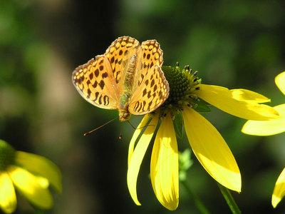 道端で見かけた蝶