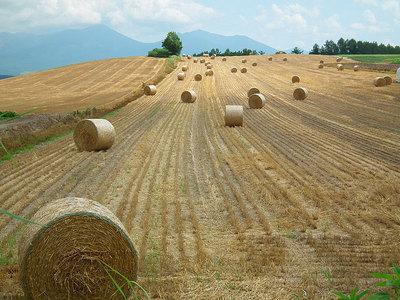 2011-08-06-上富良野町の牧草ロール