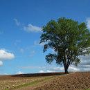 2011年9月哲学の木