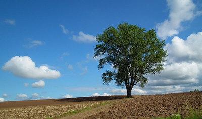 2011-09-24-哲学の木