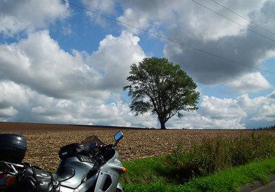 2011-09-24-哲学の木とバイク