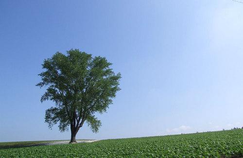 2009-07-07-美瑛マスツー 哲学の木