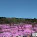 2010年5月滝上&湧別花めぐり 前編