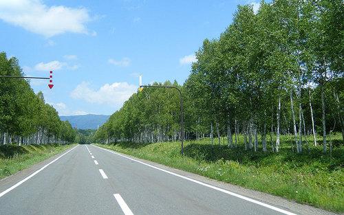 2014-08-02-三国峠手前の白樺林