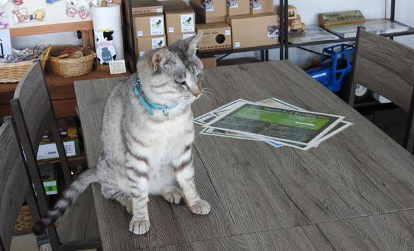 2017-09-10-ナイタイ高原のレストハウスにいた猫
