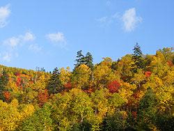 カミホロ荘周辺の紅葉
