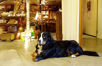 中村屋の看板犬 ミミ